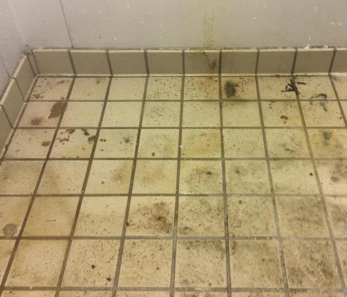 Removing Mold from Company Bathroom Before