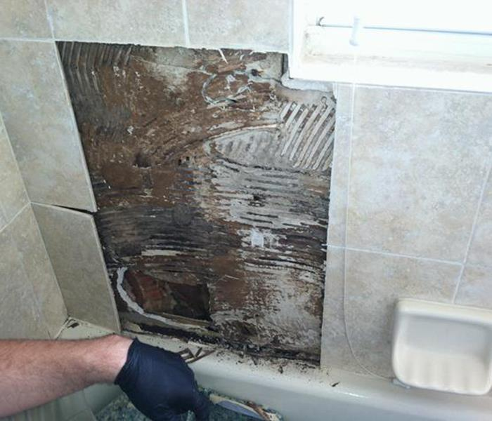 Mold Damage – Cockeysville  Bathroom